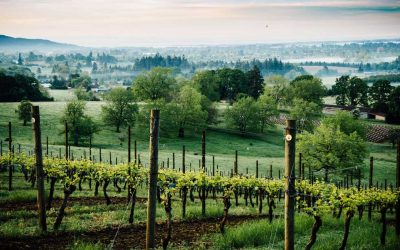 Skip Napa. 8 Reasons to Tour Oregon's Willamette Valley Instead
