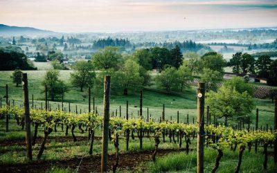 Skip Napa. 8 Reasons to Tour Oregon's Willamette Valley Instead