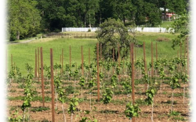 Sustainability in the Vineyard